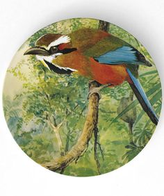 Motmot  antique bird artwork reproduced on 10 inch Melamine Plate. $18,00, via Etsy.