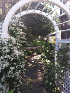 Sweet Autumn Clematis on White arbor Sweet Autumn Clematis, Landscape Designs, Outdoor Structures, Gardening, Plants, Garten, Lawn And Garden, Planters, Garden