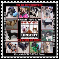 """***12 BEAUTIFUL LIVES TO BE DESTROYED 10/14/16 @ NYC ACC. *SO MANY GREAT DOGS HAVE BEEN KILLED: Puppies, Throw Away Mamas, Good Family Dogs. This is a HIGH KILL """"CARE CENTER"""" w/ POOR LIVING CONDITIONS. Please Share!"""