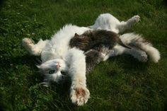 Homemade Cat Deterrent thumbnail