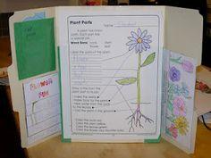 Plant Lap Book Idea