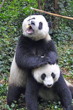 Chengdu Panda Breeding Center (Centro de Reproducción de Pandas Chengdu), por Ben Ho