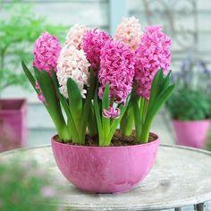 Pink-coloured flower pot