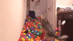 Husky vs 5400 balls