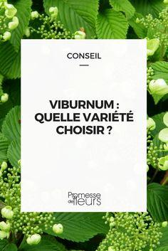 Quel viorne choisir pour votre jardin ? Suivez nos conseils ! #jardin #jardinage #arbuste