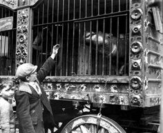 Circus Animal Cage Wagon