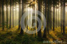 Autumn forest in South Bohemian region. Czech Republic.
