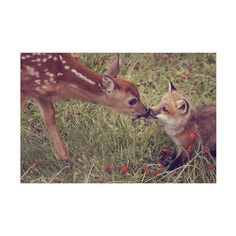 fuck yeah kissing ❤ liked on Polyvore featuring animals, pictures, backgrounds, photos, pics, fillers, quotes, phrase, saying and text