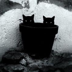 black cat, black cat