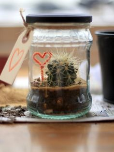 Make a terrarium for your cactus by recycling a glass jar. Makes an adorable gift for a loved one & is easy to do!
