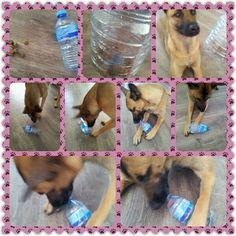 Spel 33 (hondenspel hond spel denkwerk hersenwerk brain dog game play diy) www.facebook.com/denkspellenvoorjehond
