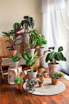 """Houseplants Are Judging You """"Your Houseplants Are Judging You"""" Fun quick read fromThe New Yorker. What our plants are really thinking.""""Your Houseplants Are Judging You"""" Fun quick read fromThe New Yorker. What our plants are really thinking. Hanging Plants, Potted Plants, Garden Plants, Indoor Plants, Room With Plants, House Plants Decor, Plant Decor, Decoration Plante, Smart Garden"""