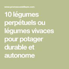 10 légumes perpétuels ou légumes vivaces pour potager durable et autonome