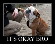Don't be mad bro :). This is why I need a bulldog