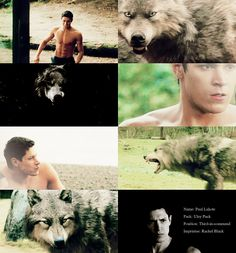 135 Best Twilight Wolf Pack images in 2016   Twilight wolf pack