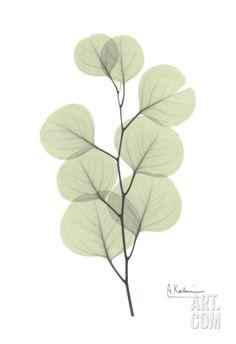 Eucalyptus in Pale Green Art Print by Albert Koetsier at Art.com