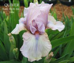 Iris ib Quiver