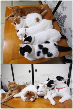 Shironeko and siblings ^_^
