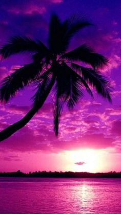 purple sunset | Related Pictures purple sunset wallpaper for iphone
