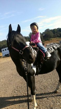 Giving a lesson to a 3 rd old. What a stallion! War Drums, Black Fire, Horses, Animals, Animales, Animaux, Animal, Horse, Animais