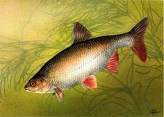 Fish, Pets, Animals, Image, Animals And Pets, Animales, Animaux, Animal, Animais