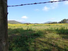 campo florido con caballos