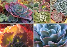 Behind the Scenes with my Succulents 2014 Calendar - Gardening Gone Wild - See more at: http://www.gardeninggonewild.com/?p=25429#sthash.JvB5B2Zu.dpuf