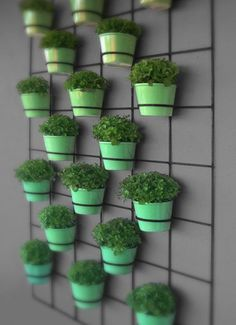 Wall Planters - insitu wall planters