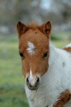 1e4af7f02 265 Best Cute Ponies and Horses images