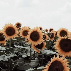 """""""Bloom where you are planted."""""""