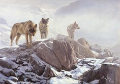 wolves hunting - Google Search