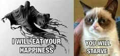 Funny Animal Pictures - Grumpy Cat - Ideas of Grumpy Cat - Dementor vs. Grumpy Cat More The post Funny Animal Pictures appeared first on Cat Gig. Meme Grumpy Cat, Cat Memes, Funny Memes, Grumpy Kitty, Grump Cat, Memes Humor, Hilarious Jokes, Nerd Humor, Funniest Memes