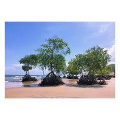#barravelha #praia #beach #Marajó #baiademarajo #likeasea #mangue #manguezal #pará