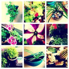 #botanic