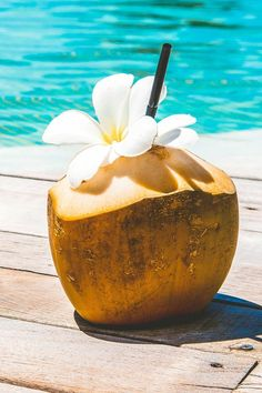 Have all of the benefits of coconuts within your very own home by checking out our Florida-grown yellow baby coconut trees strictly selected from our very own plantation Grab yours today Miami Bakery, Beach Aesthetic, Aesthetic Photo, Live Plants, Coconut Water, Houseplants, Food Network Recipes, Coffee Shop, Benefit