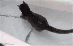 animaux drôles chats drôles gif