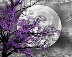 Black and White Purple Tree Moon Wall Art Black Art, Black And White, Color Black, Red Black, Purple Trees, Yellow Tree, Purple Flowers, Moon Pictures, Moon Magic