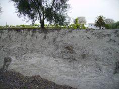 Perfil de suelo de la Sierra de Montilla