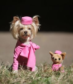 Dogs As Kardashians & More Adorable Canine Halloween Costumes Amazing Halloween Costumes, Halloween Fashion, Bruiser Woods, Animal Dress Up, Puppy Costume, Elle Woods, Wood Dog, Cosplay, Dog Dresses