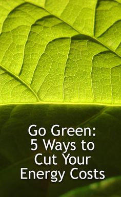 Energy Efficiency, Go Green, 5 Ways, Plant Leaves, Real Estate, Energy Conservation, Real Estates