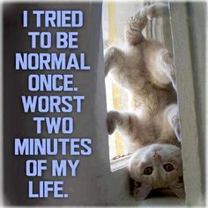 I tried to be normal once. Worst two minutes of my life funny funny quotes humor funny pictures funny images Funny Animal Memes, Cute Funny Animals, Funny Animal Pictures, Cat Memes, Cute Cats, Funny Cats, Funny Quotes, Animal Funnies, Silly Cats