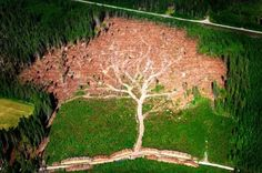 In Jan '05, a hurricane-force storm swept through Sweden, felling 75 million cubic meters of forest in its wake. After officials cleared a particular patch of pine trees in southern Sweden, a magnificent pattern of a giant tree emerged. Joakim Berglund captured the moment in this awesome photograph, which went on to win Sweden's annual press awards in '06. All these years later, Berglund's powerful image continues to underscore Mother Nature's potential for both extraordinary beauty and…