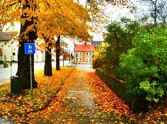 Autumn in Kristiansand, Norway.