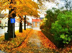 Autumn in Kristiansand, Norway.