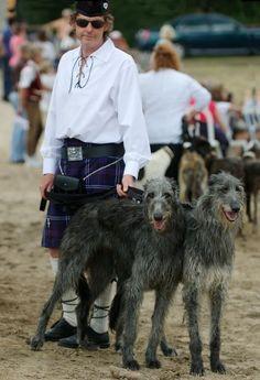 Scottish deerhound. Des hommes et des chiens - - Site de Manializa. Scottish Deerhound, Irish Wolfhounds, Goldendoodles, Greyhounds, Scottie, Girls Best Friend, Terriers, Fashion Men, Beautiful Creatures