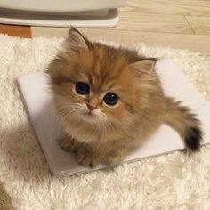 Cutie kitty ❤❤
