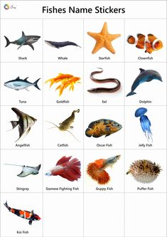 Explore our list of fish names in English. High-quality pictures, photos, videos, printable charts, stickers and colouring sheets for kids. Animals Name With Picture, Fish List, Fish Coloring Page, Flashcards For Kids, Coloring Sheets For Kids, Funny Jokes In Hindi, Photo Pin, Fish Ponds, Realistic Paintings