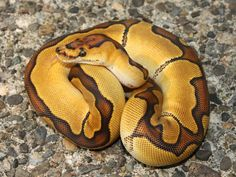 Enchi Clown