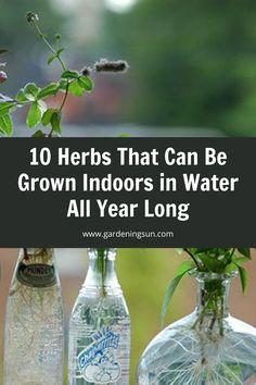Diy Herb Garden, Herb Garden Design, Garden Plants, Growing Herbs Indoors, Growing Vegetables, Growing Plants, Gardening For Beginners, Gardening Tips, Indoor Gardening