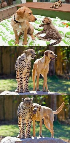 Best Friends ❤️ dog and big cat